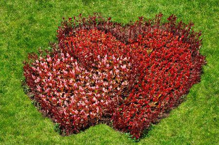 Dos corazones hechos de flores de forma flor roja cama en la hierba verde de fondo Foto de archivo - 426424