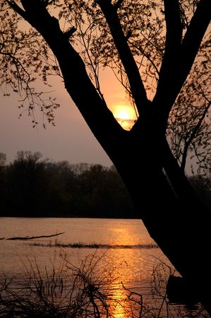 Beautiful sunset on the river sun covered by tree silhouette summer nature background Stock Photo - 426383