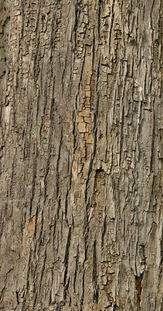 Detailed tiled seamless tree bark texture background Stock Photo - 426374