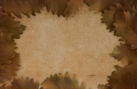 yellowing: Brown dried oak leaves on paper - framed background