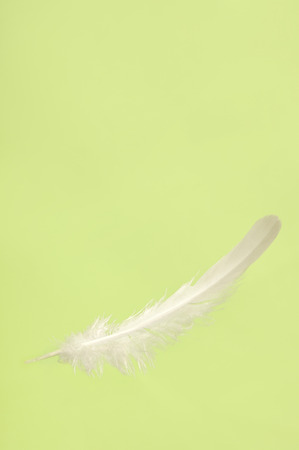 upclose: Falling white delicate bird feather close-up isolated over light green background