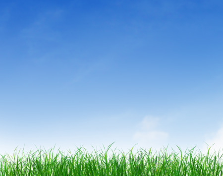 blue texture: Green grass growing under clear blue sky background Stock Photo