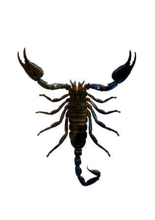 Scorpio Isolated silhouette with clipping path on white background photo