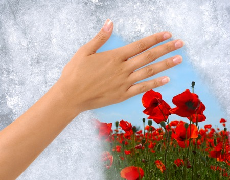 changing colors: Hand removing Ice from a frozen window revealing field of flowers behind. Clipping path around the hand included.