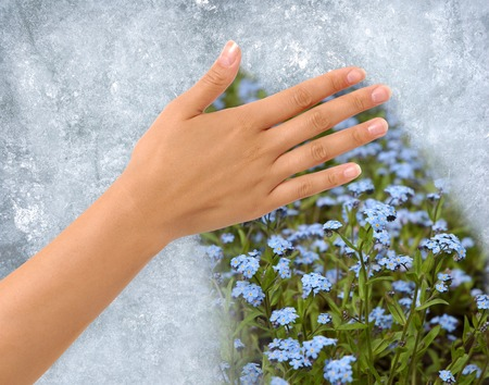 spring: Hand removing Ice from a frozen window revealing field of flowers behind. Clipping path around the hand included.