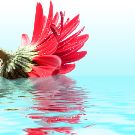 beautiful flower with reflection photo
