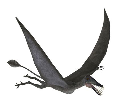 belong: 3D render depicting a Dorygnathus (prehistoric flying creature) in flight. These creatures belong to a genus called Pterosaurs , based on the Greek word for flying lizard. They are also known as Pterodactyls, which is based on a Greek word for winged f Stock Photo