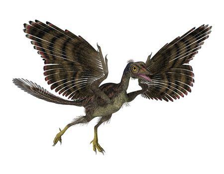 dinosauro: 3D render caratterizzato da un Archaeopteryx, un uccello preistorico che visse durante il tardo periodo Giurassico. L'Archaeopteryx potrebbe essere il fossile di transizione tra dinosauri e uccelli, ed è per questo svolge un ruolo importante non solo nello studio del cer