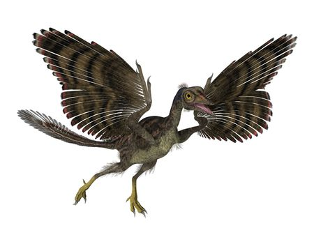 ancestor: 3D render featuring an archaeopteryx, a prehistoric bird that lived during the late Jurassic period. The archaeopteryx might be the transitional fossil between dinosaurs and birds; which is why it plays an important role not only in the study of the origi