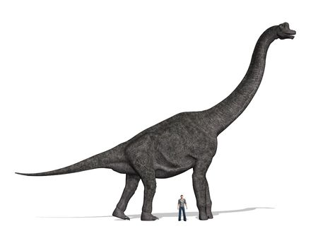 sauropod: A Brachiosaurus dinosaur with a man standing nearby for size comparison. At 40 to 50 feet tall, that was one huge dinosaur!