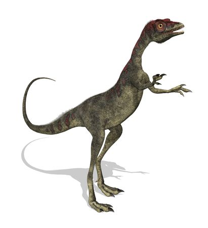 jurassic: 3D render of a compsognathus dinosaur. This dinosaur was the size of a turkey, and lived during the late Jurassic period.