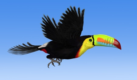 toucan: A Keel Billed Toucan flying against a blue sky - 3d render. Stock Photo