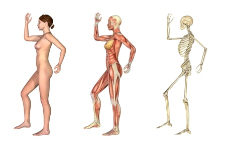 overlays: A set of anatomical overlays depicting the side view of a woman an arm and leg bent. These images will line up exactly, and can be used to study anatomy. 3D render.