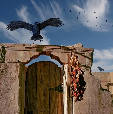 A raven  photo