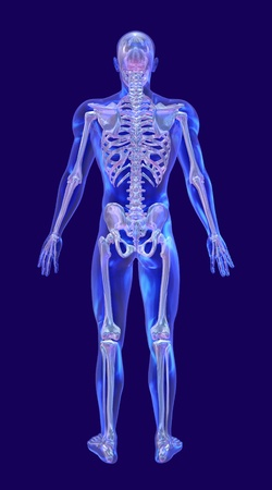 transparent male anatomy: A blue glass man with an iridescent skeleton, back view - 3d render. Stock Photo