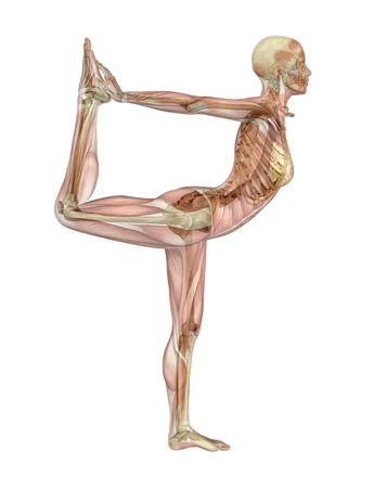 A woman takes a yoga dancer pose - semi-transparent muscle over skeleton - 3d render.
