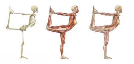 esqueleto humano: Pose de bailarina de yoga, render - 3d de superposiciones anatómicas. Foto de archivo