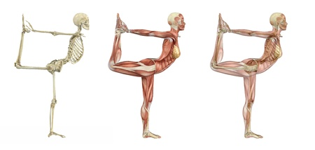 orthopedics: Yoga dancer pose, anatomical overlays - 3d render. Stock Photo