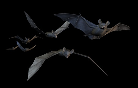 3d scary: A group of six bats flying - 3D render with digital painting. Stock Photo
