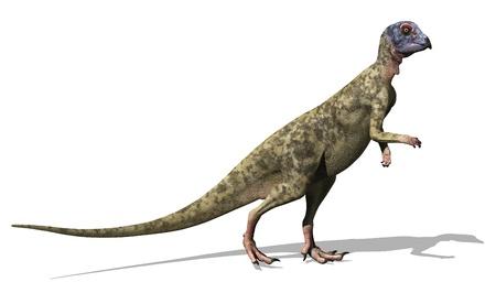 dinosauro: Un Hypsilophodon foxii, un piccolo dinosauro del periodo Cretaceo - 3D rendering.