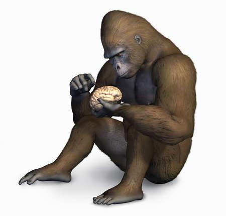 darwinism: 3D render of a gorilla inspecting a human brain.