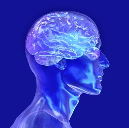 cognicion: 3d de una cabeza masculina de cristal con un cerebro. Foto de archivo