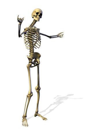 ortopedia: Acogiendo con satisfacción Skeleton - 3D rinden