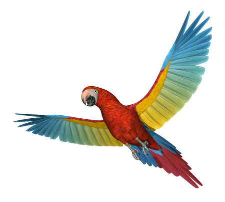 A Scarlet Macaw flying - 3D render Stock Photo - 11277193
