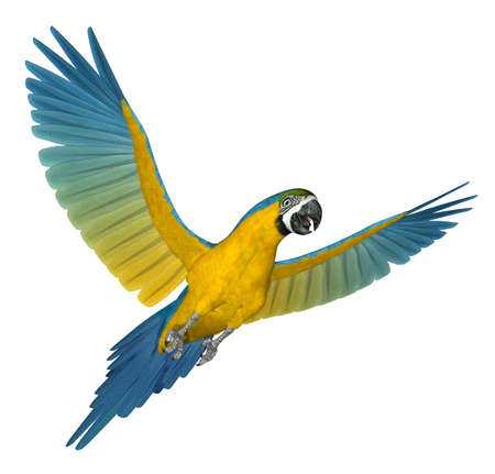Blue and Gold Macaw flying - 3D render. Stock Photo