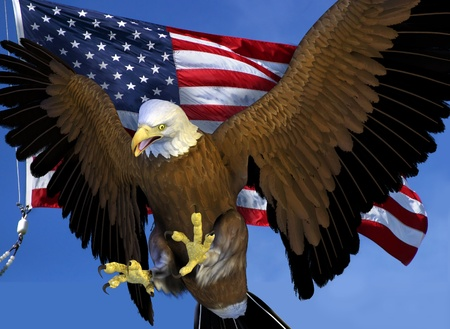 patriotic eagle: 3D render of a Bald Eagle with the US flag.