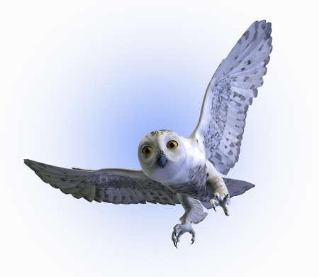bird of prey: Snowy Owl swooping down - 3D render.