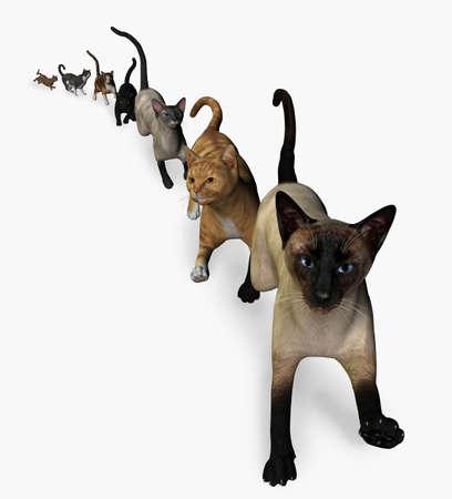 multiplicar: Los gatos est�n llegando! 3D render