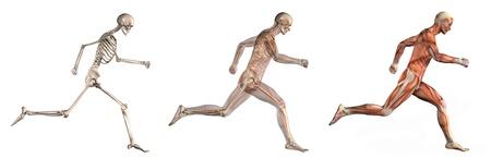 skelett mensch: Serie von drei anatomischen 3D rendert zeigt einen Mann laufen, von der Seite gesehen. Diese Bilder werden dazu genau und kann verwendet werden als Overlays Anatomie studieren zu werden.
