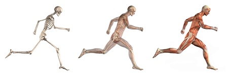 skeleton: Series of three anatomical 3D renders depicting a man running, viewed from the side. These images will line up exactly, and can be used as overlays to study anatomy.