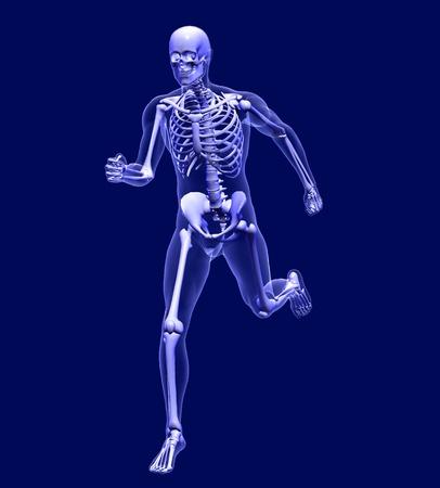 skelett mensch: 3D rendern Simulation eines Xray Bild von einem Mann ausgef�hrt wird.