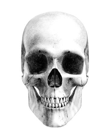 grafit: Ludzkiej czaszki - widok z przodu-Pencil Drawing Style - jest to 3D render, efekt ołówka został osiągnięty dzięki zastosowaniu specjalnego cieniowania w procesie renderowania. Niesamowite szczegóły.