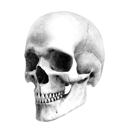 medical drawing: Human Skull - Three-Quarter View- Pencil Drawing Style - this is a 3D render, the pencil effect was achieved by using special shaders in the rendering process. Amazing detail.
