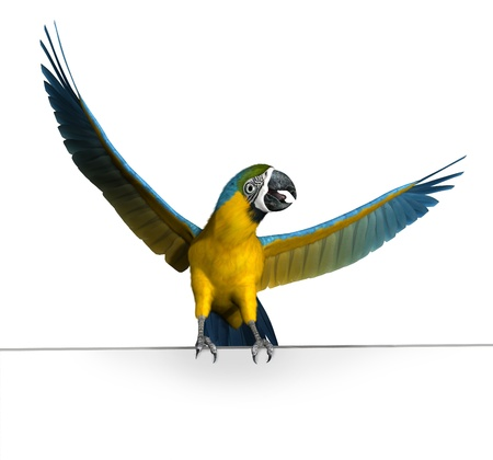 blue parrot: 3D render of a macaw perched on the edge of a frame or blank sign.