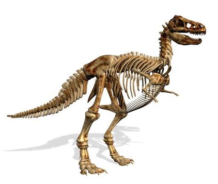 fossil: Tyrannosaurus Rex Skeleton -3D render