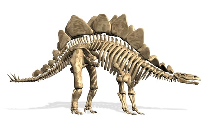 Stegosaurus Skeleton - 3D render
