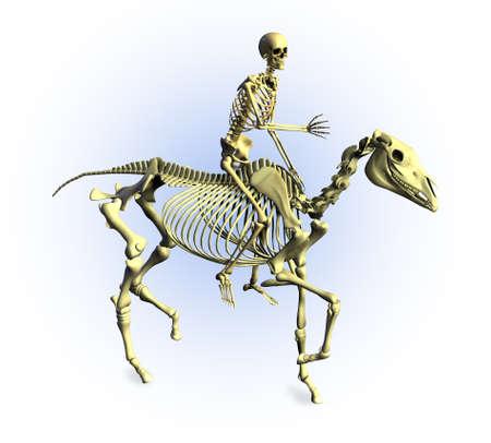 equine: 3D render of a human skeleton riding a skeleton horse.