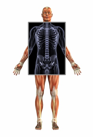 skeletal system: 3D render - Anatomy of Muscles with Xray - Male.