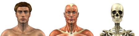 overlays: Serie de tres 3D anat�micos hace que representa a un hombre de frente, cabeza y los hombros, los m�sculos y el cr�neo. Estas im�genes se alinear�n exactamente, y puede ser utilizado como revestimientos para estudiar anatom�a.