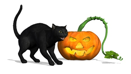 Black Cat with Pumpkin - 3D render photo