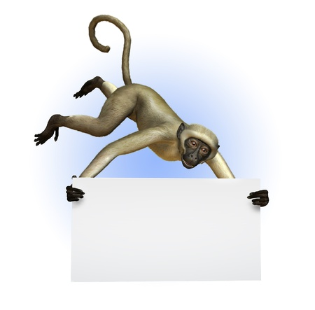 Monkey Holding a Blank Sign - 3D render Stock Photo - 11711059