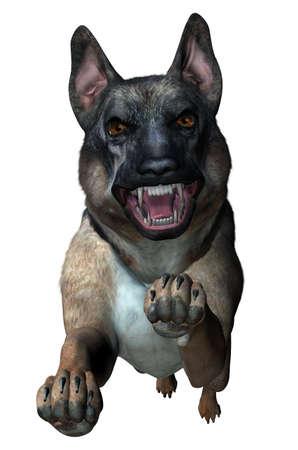 kampfhund: Deutsch Shepherd Angriffe - 3D Render Lizenzfreie Bilder