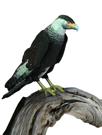 CaraCara Vulture Perched on Wood - 3D render - wood is photo Stock Photo - 11711125