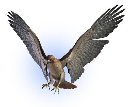 tailed: Red Tailed Hawk getting ready to land - 3D render. Stock Photo