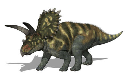 The Coahuilaceratops dinosaur lived in Mexico during the Late Cretaceous Period - 3D render.