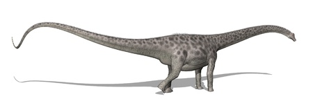 The diplodocus dinosaur lived in North America at the end of the Jurassic period - 3D render.